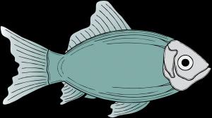Vishandel Schiedam